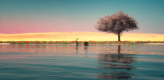 sunset and tree Royalty Free Stock Photo