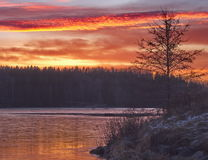 Sunset. Tree with a frozen lake and a beautiful sky in the background Royalty Free Stock Photography