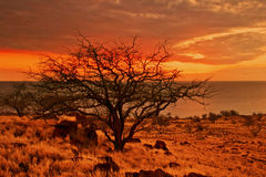 Sunset tree of Hawaii Stock Photography