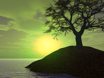 Sunset Tree Holm Royalty Free Stock Images