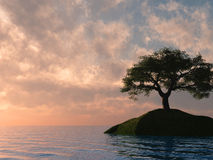 Sunset Tree Holm Stock Photo