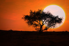 Sunset Tree. A huge sun setting behind a tree in the barren countryside of India Royalty Free Stock Photo