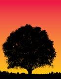 Sunset tree illustration Stock Photo