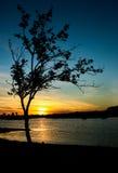 Sunset Tree. Tree lake gold sunset shape Royalty Free Stock Photos