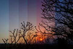 Sunset with tree limb. Different shade color of sunset with tree limb royalty free stock images