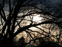 Sunset. Tree masking the sun as it sets Royalty Free Stock Photos