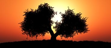 Sunset and tree Stock Image