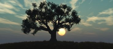 Sunset and tree Royalty Free Stock Photography