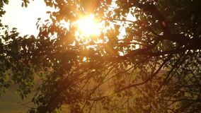 Sunset tree stock footage