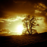 Sunset and tree, Oswestry, Shropshire, England Stock Images