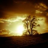 Sunset and tree, Oswestry, Shropshire, England. Sunset and tree nd face in the clouds in Oswestry, Shropshire, England Stock Images