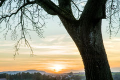 Sunset with tree stock photos