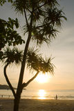 Sunset tree at Patong beach Stock Photography