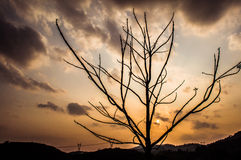 Sunset and tree. Photograph of a silhouette of a tree taken at sunset Royalty Free Stock Photos