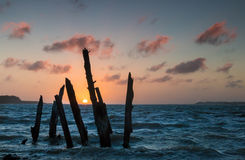 Sunset Tree Posts Royalty Free Stock Photography