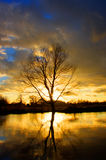 Sunset Tree reflection on river Royalty Free Stock Image