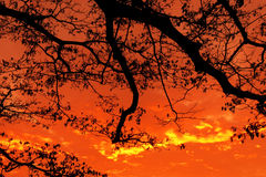 Sunset with tree Royalty Free Stock Photo