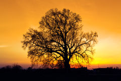 Sunset with tree silhouette. Royalty Free Stock Images