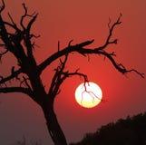 Sunset Tree Silhouette Royalty Free Stock Photos