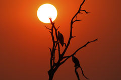 Sunset Tree Silhouette Stock Images