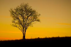 Sunset tree silhouette Stock Photography