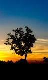 Sunset Tree Silhouette ,blue ,gold sky ,Thailand. Sunset Tree Silhouette Udon Thani Thailand Stock Images