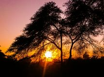 Sunset. Tree silhouette colorful Royalty Free Stock Photo