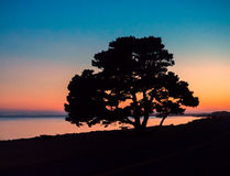 Sunset with tree silhouette Royalty Free Stock Images
