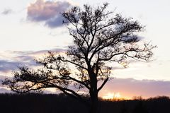 Sunset and tree silhouette Royalty Free Stock Photo