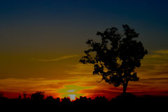 Sunset Tree Silhouette , Thailand. Sunset Tree Silhouette , Udonthani  Thailand Royalty Free Stock Photography