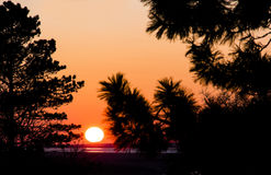 Sunset with tree silhouettes Royalty Free Stock Images