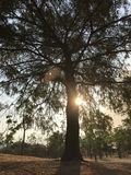 Sunset in a tree royalty free stock photo