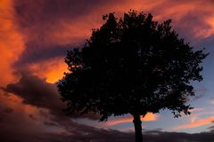 Sunset. A tree with the sun setting in the background Stock Photos