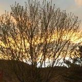 Sunset tree Royalty Free Stock Photos