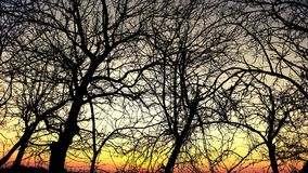Sunset. Tree trees Stock Photography