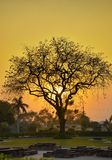 Sunset tree Stock Image