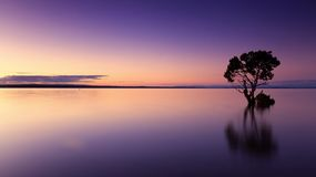 Sunset, Tree, Water, Silhouette Royalty Free Stock Photo