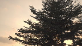 Sunset tree. Zoom Sunset tree  A beautiful animation of a solitary tree against a bright Sunset or Sunrise stock video footage