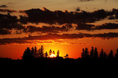 Sunset and Trees Royalty Free Stock Photos