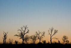 Sunset trees. Couple of tress during fall just before the sunset stock photography