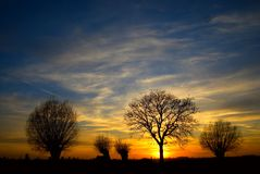 Sunset with trees. Sunset with backlit trees on the horizon stock image