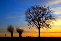 Sunset with trees Stock Photo