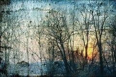 Sunset trees Stock Photos