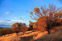 Sunset Trees Royalty Free Stock Images