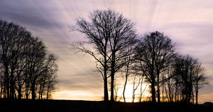 Sunset with trees Royalty Free Stock Photos