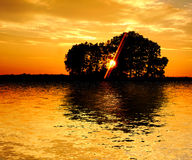 Sunset and trees Royalty Free Stock Photo