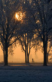 Sunset through trees. With biker Royalty Free Stock Photos