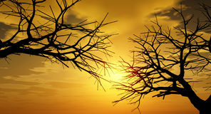 Sunset Trees Royalty Free Stock Photos