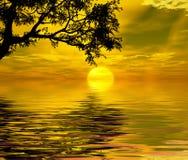 Sunset Trees Royalty Free Stock Image