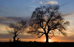 Sunset trees. Silhouette of 2trees at sunset in spring Stock Images